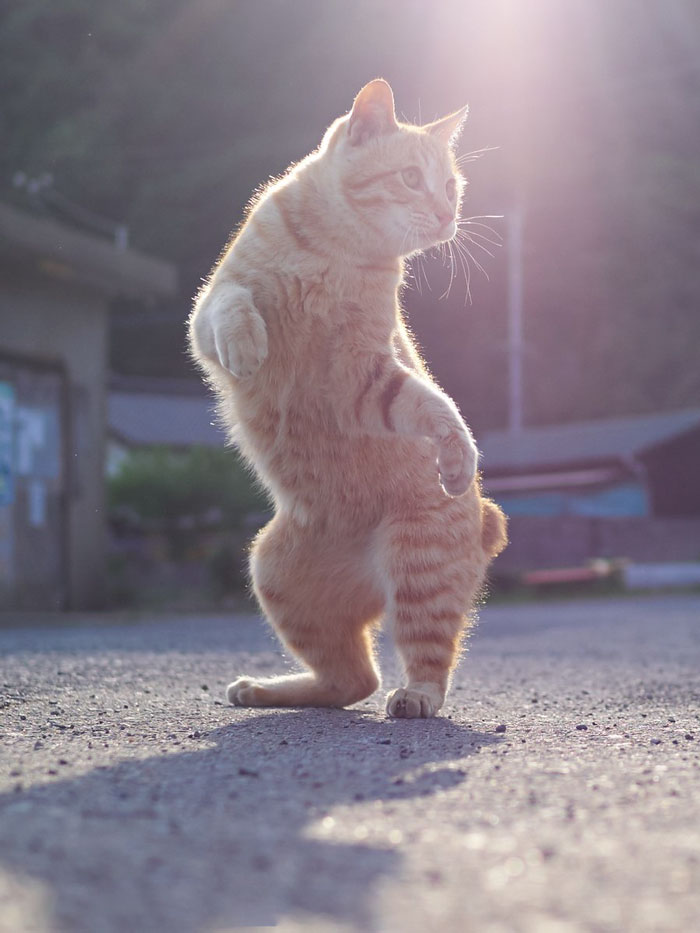 THE DANCING CAT (SHORT STORY)