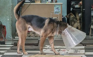 Dogs Living In Hong Kong's Car Workshops In 22 Pictures