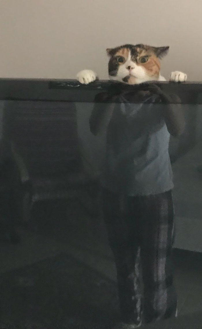 My Wife Just Texted Me This Picture Of Our Cat Playing Behind The TV