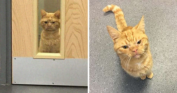A Man Found The Grumpiest Cat Ever That Was Badly Injured In The Streets Of London