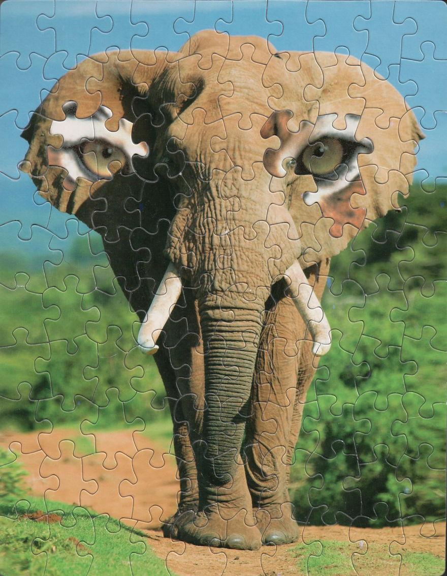 The All-Seeing Elephant