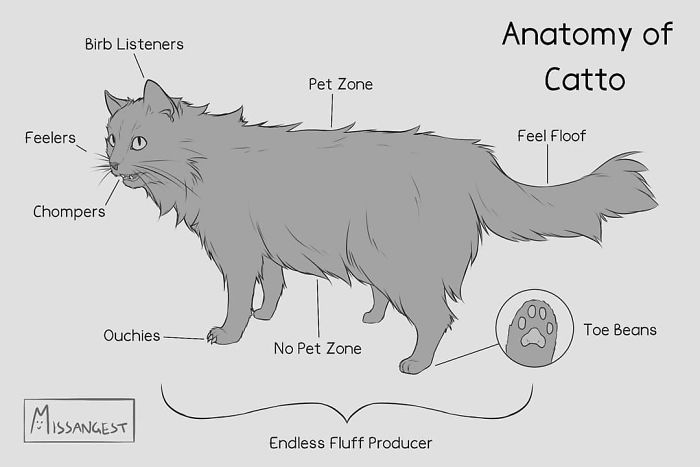 Relatable-Cat-Comics-Missangest