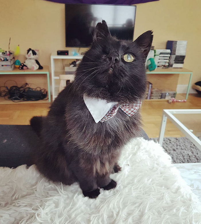 relatable-cat-comics-missangest-25