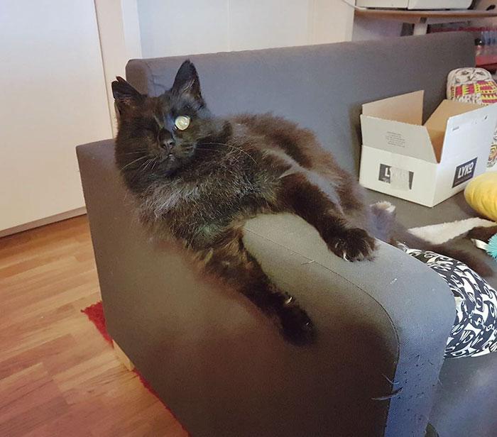 relatable-cat-comics-missangest-29