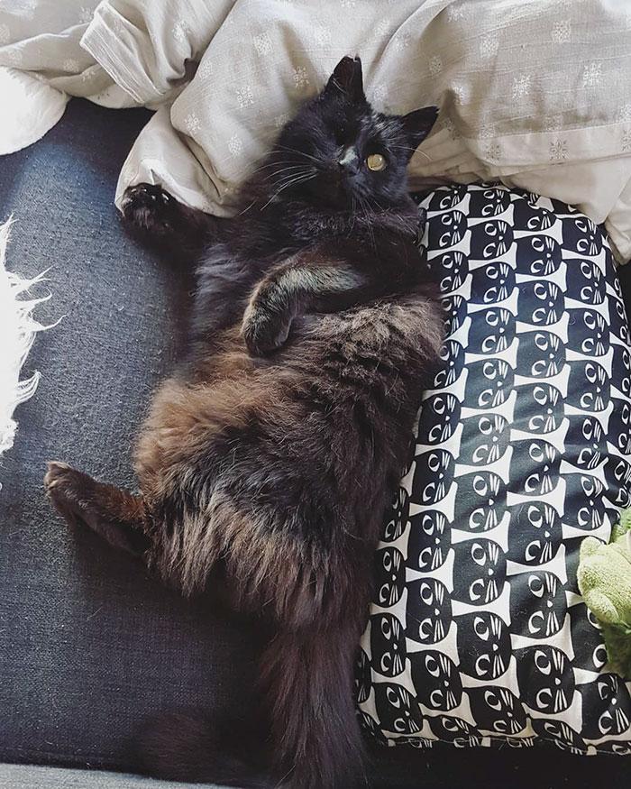 relatable-cat-comics-missangest-32