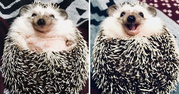 When We Picked Up Our Hedgehog We Thought He Hated Us, But Now He Won't Stop Smiling