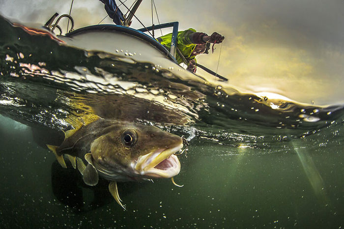 Traditional Coastal Cod Fishery (Honorable Mention)