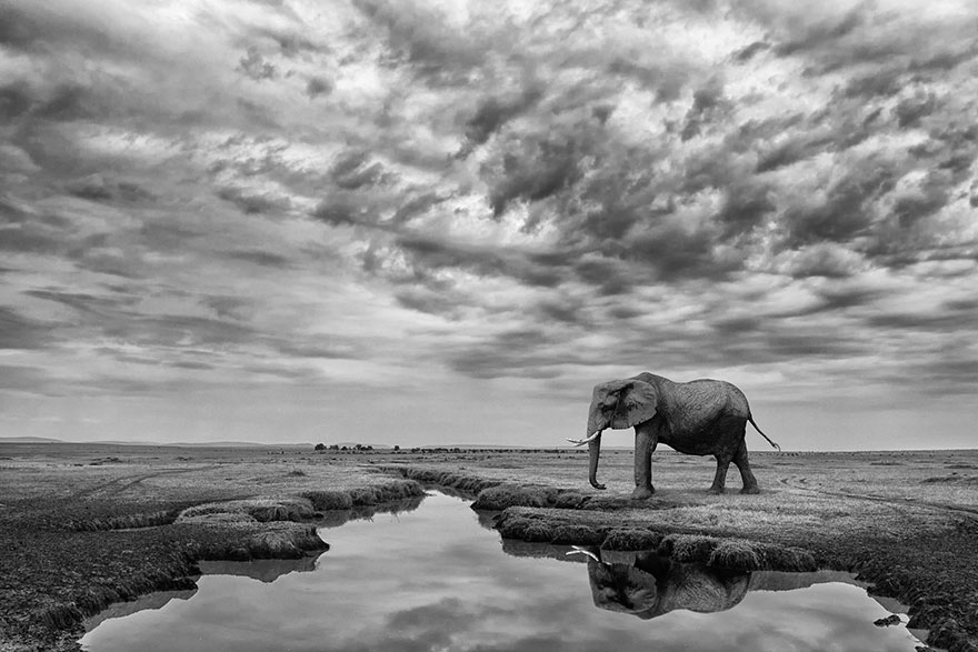 Giant Serenity, Kenya (Honorable Mention In General Monochrome Category)