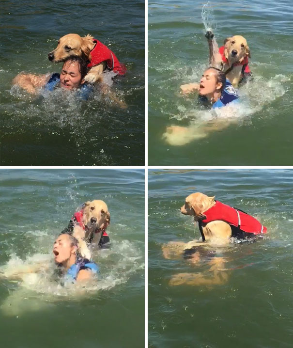 Well It Was A Nice Lake Day Until My Dog Nearly Drowned My Sister