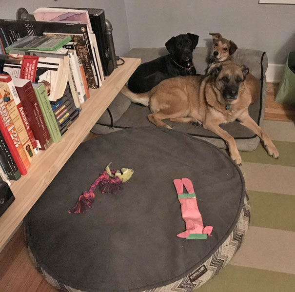 """""""No, That's Where Our Toys Sleep Dumb Dumb."""""""