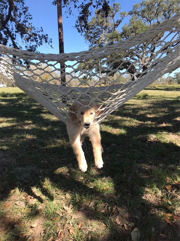 Learning How To Hammock, It's A Steep Learning Curve