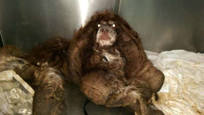 Dog Is Abandoned On A Road With Almost 6 Kg Of Fur