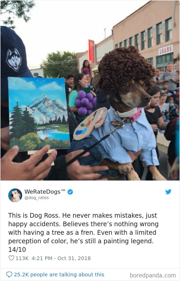 Nous évaluons les chiens
