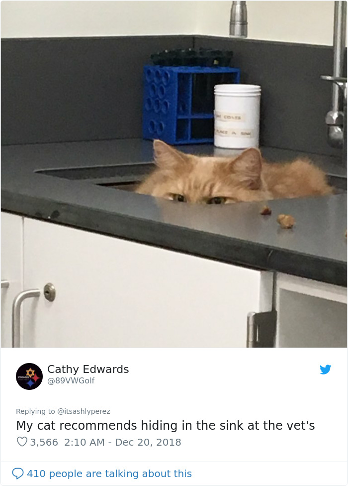 Someone Shares Pic Of Their Cat Hiding From The Vet, The Internet Responds With Their Own Hilarious Pics