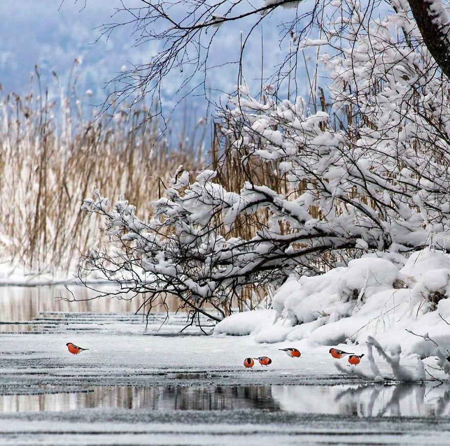 Un photographe finlandais prouve que les forêts de fées sont réelles en Finlande