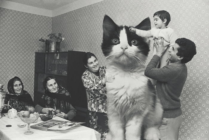 Huge Cats On The New Year's Eve In The Ussr
