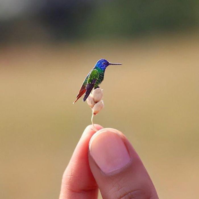 Golden-Tailed Sapphire Hummingbird