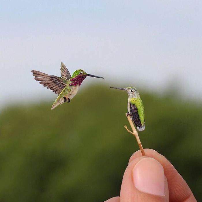 Calliope Hummingbird Couple