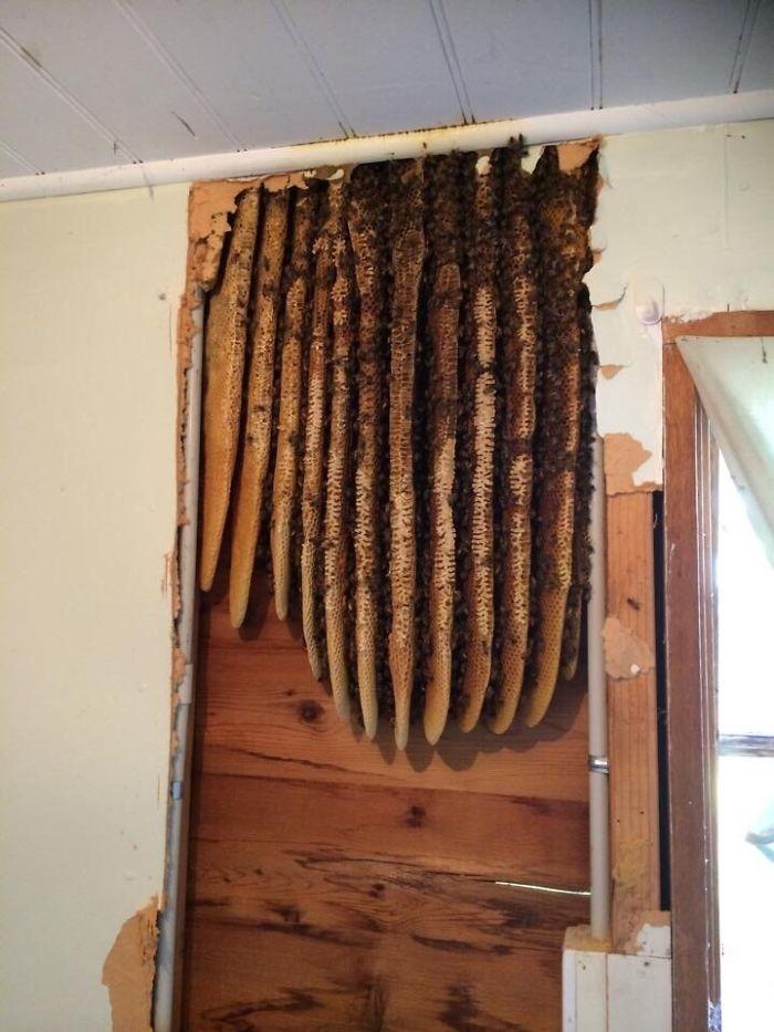 Encontré una colmena renovando una casa vieja