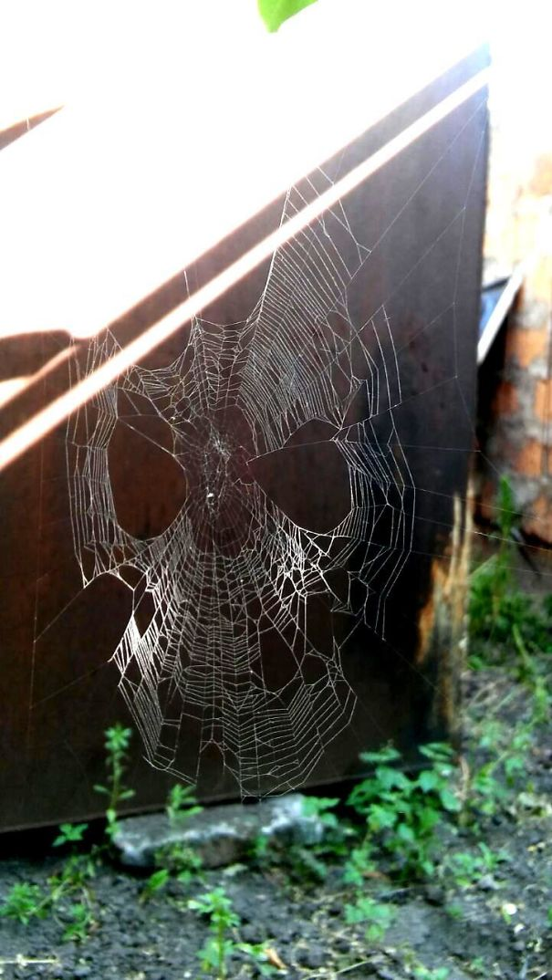 This Spider Web That Looks Like A Spider-Man Mask