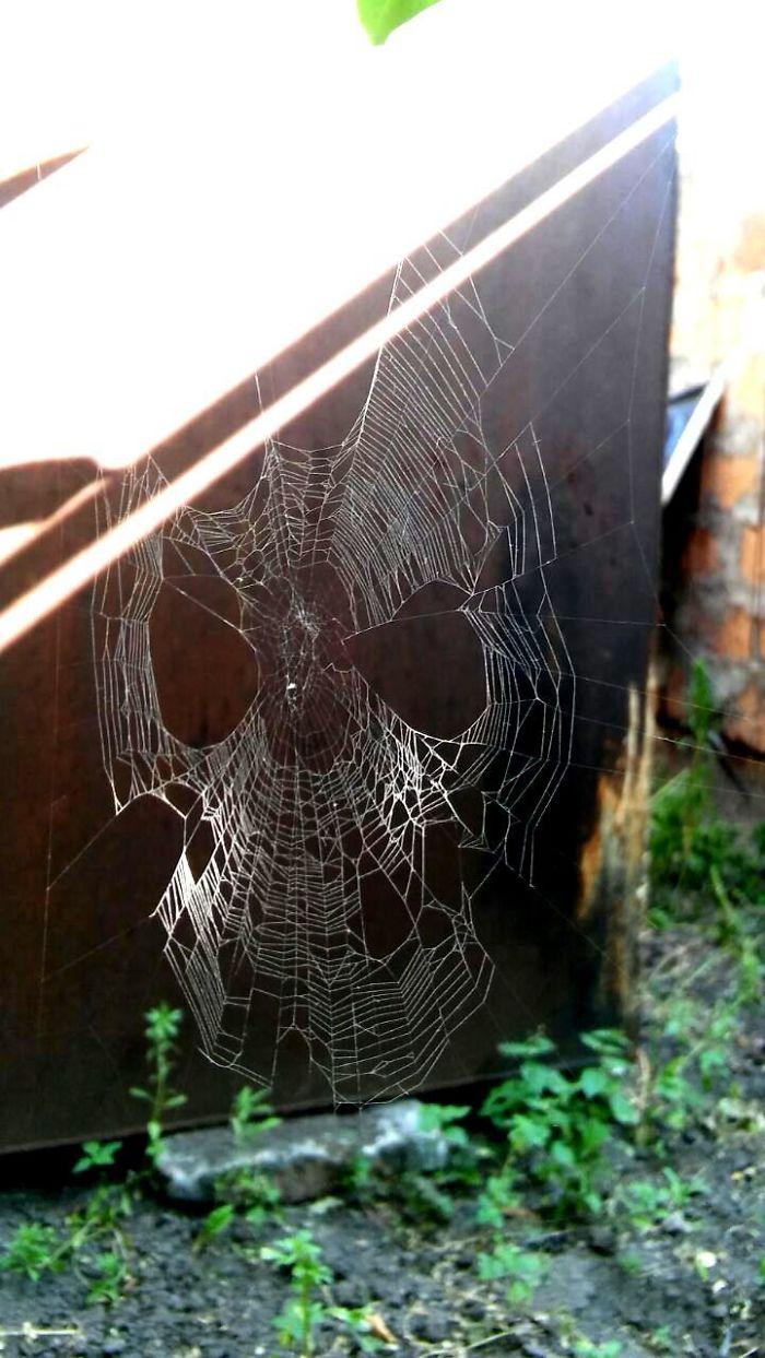 Telaraña que parece la máscara de Spiderman