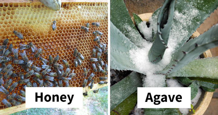 Beekeepers Sick Of Vegan Diet Hypocrisy Shut Them Down With Facts