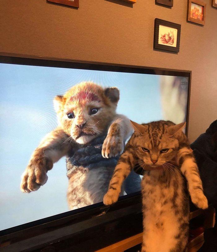 Película vs Vida real