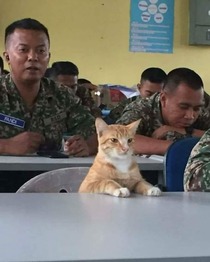 Sergeant Meow