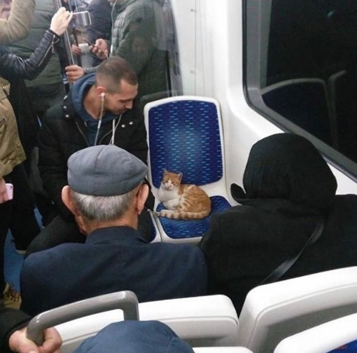 An Ordinary Bus In Istanbul