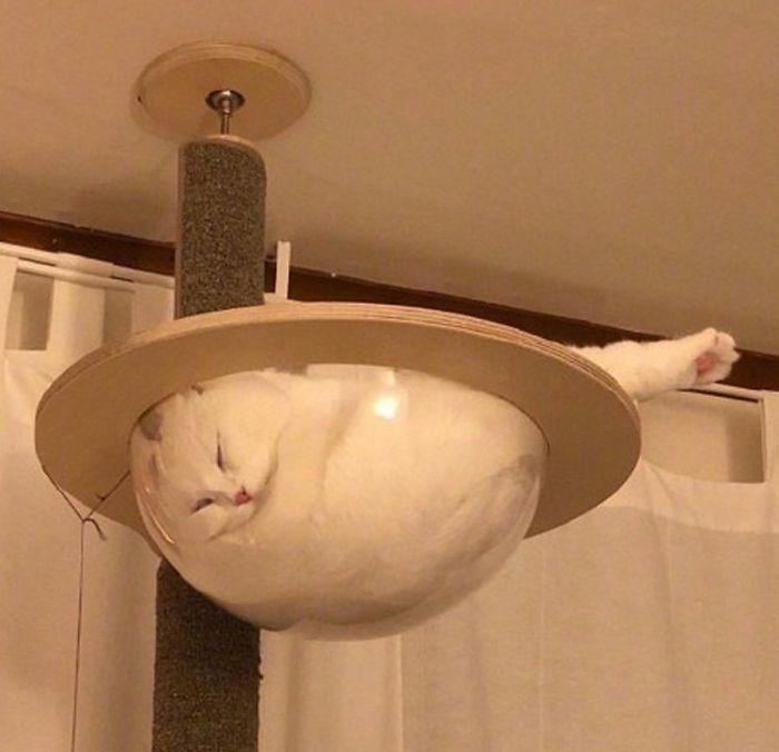 Prueba de que los gatos son líquidos