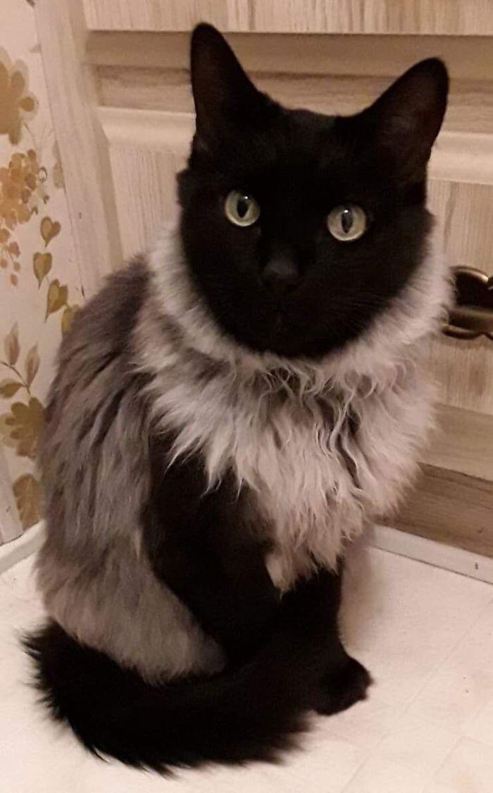 My Mom's Cat Looks Like She's Wearing A Fancy Sweater