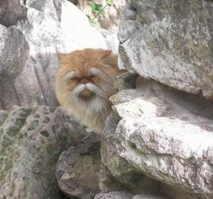 This Cat Looks Like A Gruff Old Kung Fu Master