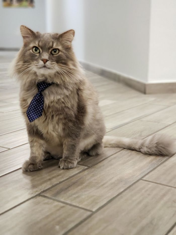 My Office Lets Me Bring My Cat To Work, So I Bought Him Some Ties
