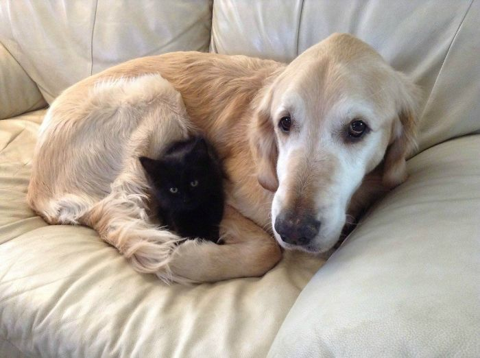 Dog Missed Having A Cat, So They Found Him A New Friend