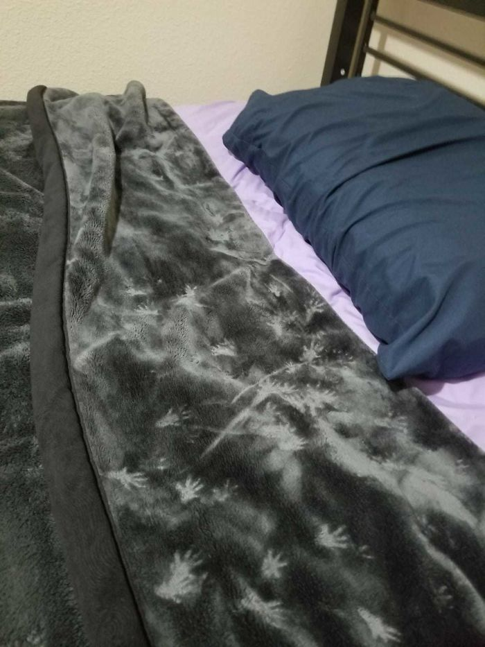 My Friend Went To His Room To Sleep Last Night And Found Rodent Prints