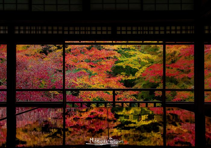 I Captured The Beautiful Fall In Kyoto
