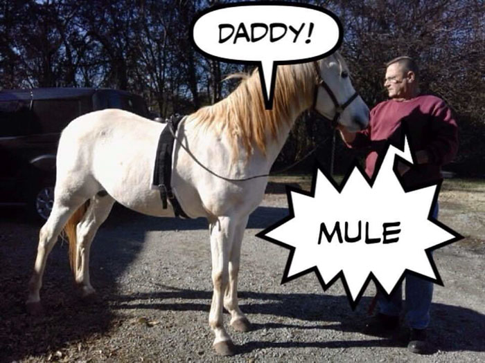 Meet Tango, The Stupidest Horse Ever Whose Stupidity Is Going Viral On Twitter