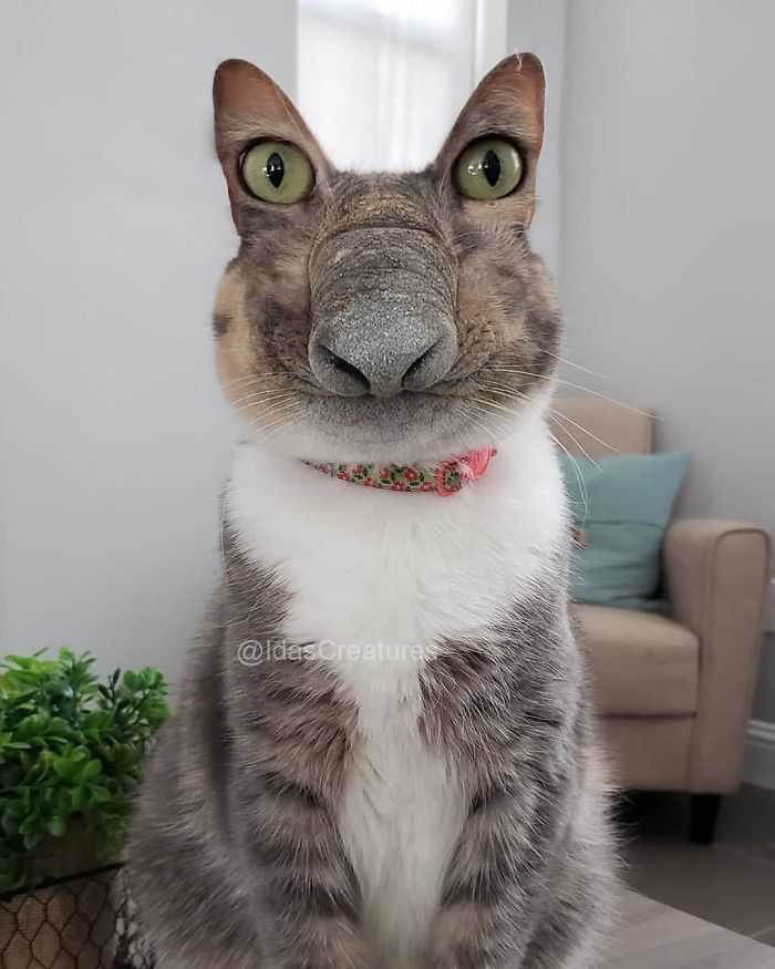 At The Request Of The Owners, Girl Turns Pets Into Monsters In Photoshop And The Result Will Give You Nightmares, Or, Make You Laugh