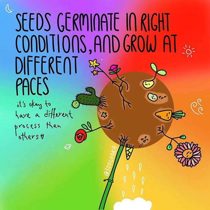 Right Timing And Right Conditions Allow Seeds To Germinate