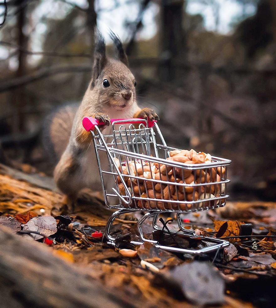 Finnish Photographer Proves Fairy Forests Are Real In Finland