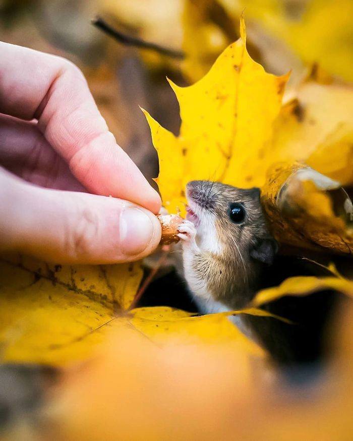 Finnish Photographer Proves Fairy Forests Are Real In Finland (41 Pics)
