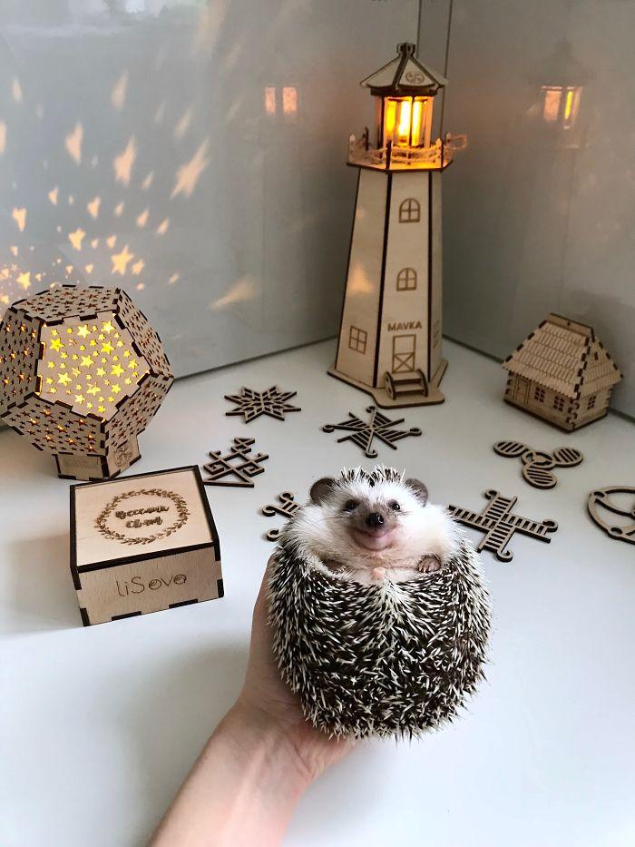 Hey Human, Do You Like My Decorations?