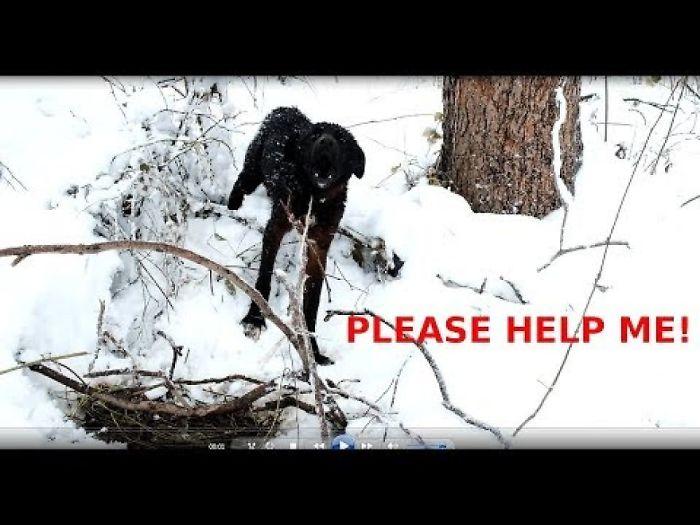 I Rescued A Straydog In Bulgaria From Death