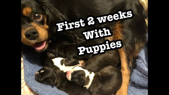 Watch Cute Newborn Puppies Growing Up | First 2 Weeks