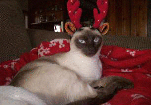 Lucy-antlers-full-kitty-5c0eb41be8c0b.jpg