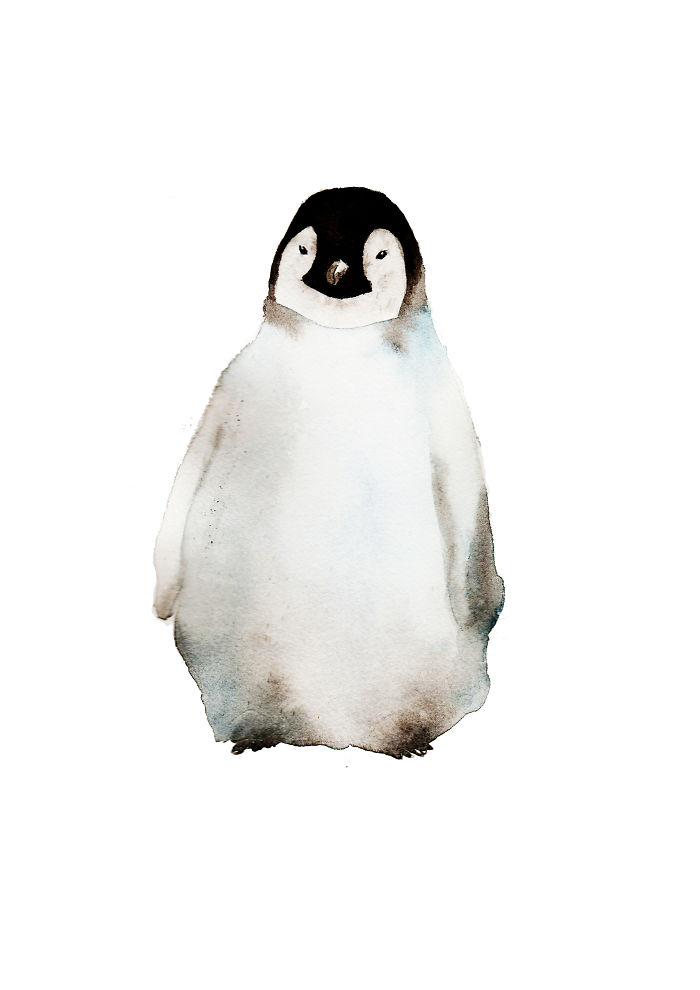 Grumpy Little Penguin