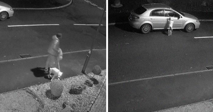 Este perro no se da cuenta de que ha sido abandonado e intenta volver al coche desesperadamente