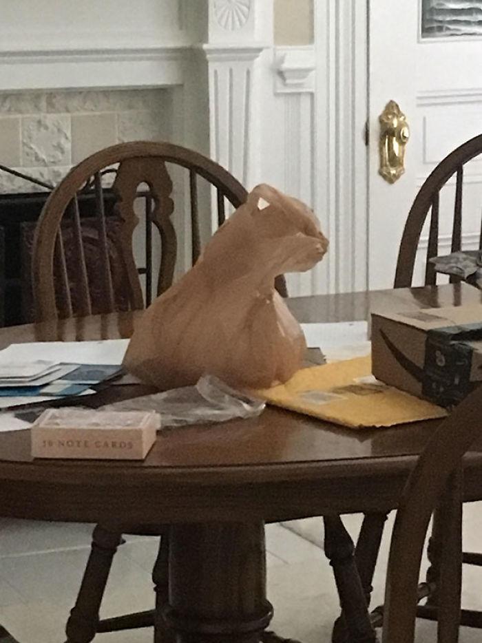 Bolsa de plástico que parece un gato