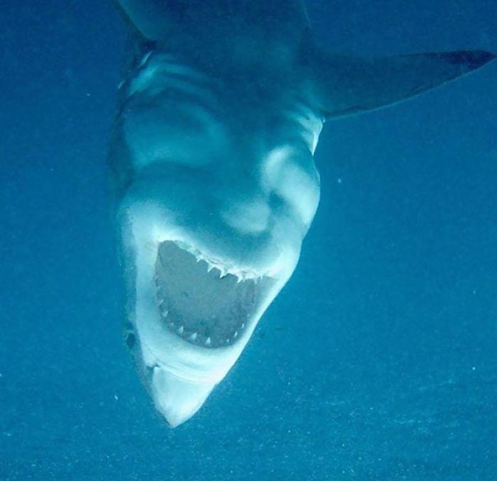 Este tiburón bocabajo parece Satán riendo