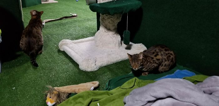 """""""I Adopted My Brother's Two Bengals When He Passed Away. I Did My Best To Build Them A Cat Jungle In My Basement And Make Him Proud"""""""